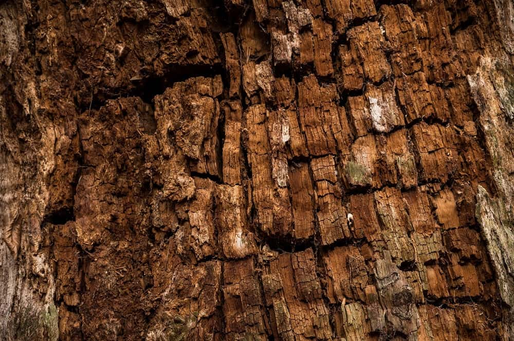 歴史あるカシの木。Photo by Tim Wagner