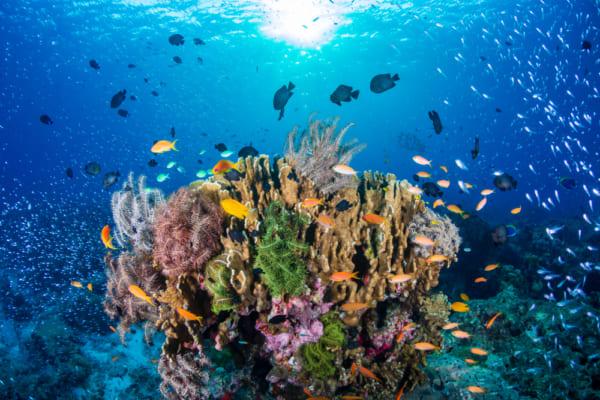 海洋プラスチック | 世界のソーシャルグッドなアイデアマガジン ...