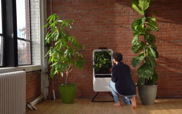 空気をキレイにする観葉植物