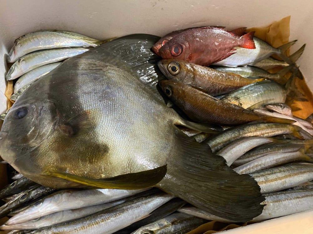 二木島の漁師さんからの魚
