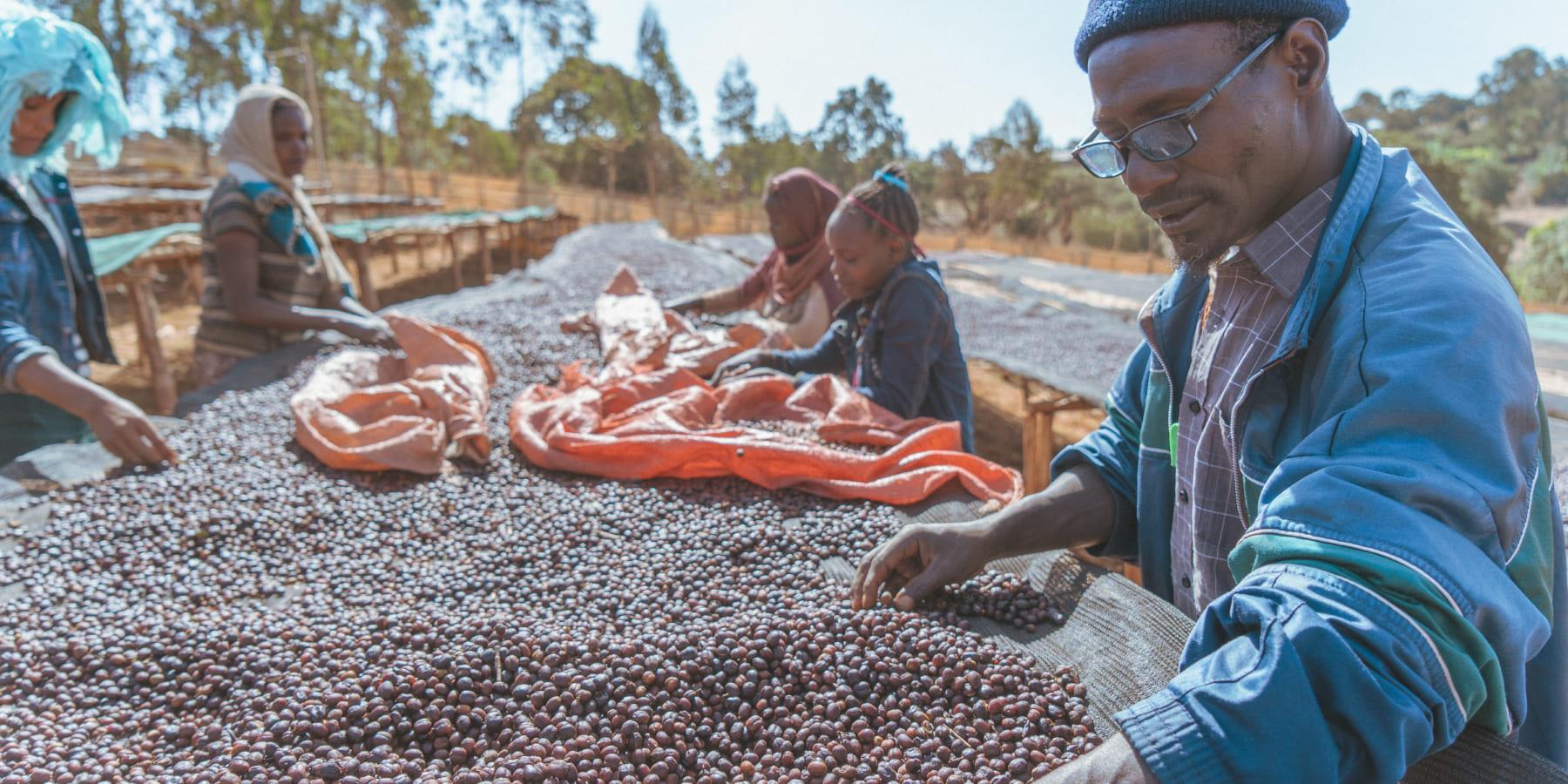 産地とつながるダイレクトトレード。コーヒー生豆流通のDX「TYPICA」