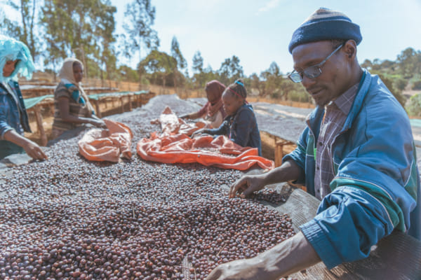 エチオピアのコーヒー生産者。実際に現地に足を運んで取材をする