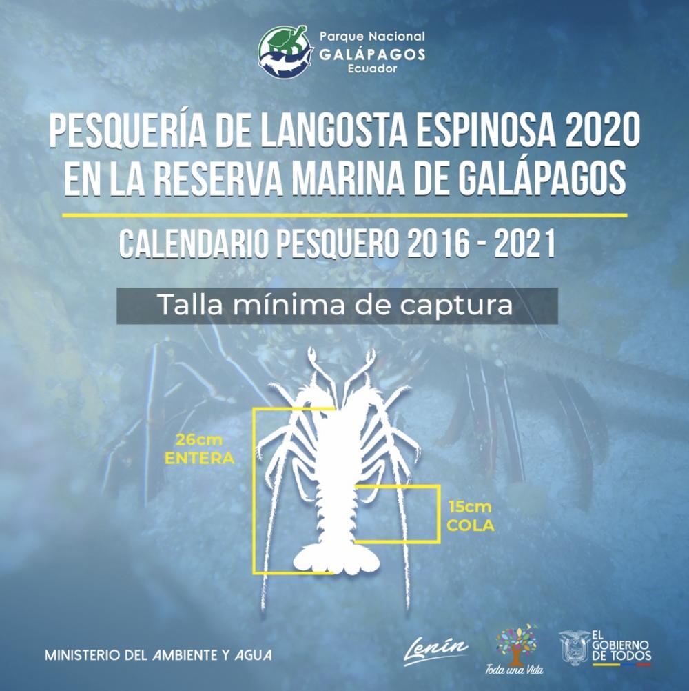 『ガラパゴス海洋保護区におけるイセエビの漁期と漁が可能な最小サイズ』を知らせるポスター