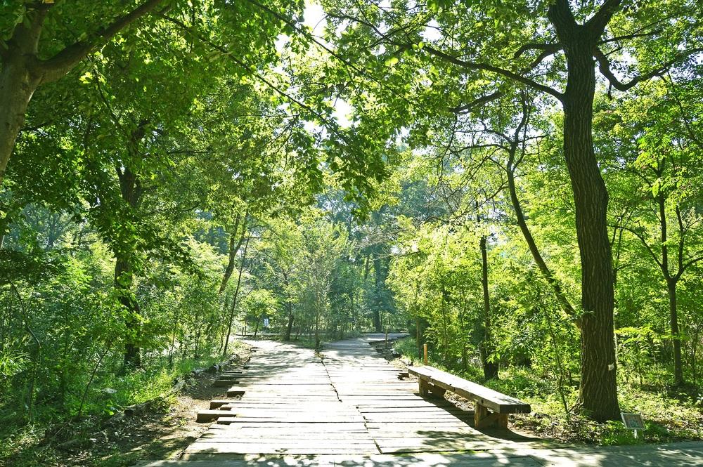 三富今昔村のくぬぎの森には1300種以上の同色物が生息している。