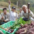 ほぼ100%地産地消。広島の『restaurant be』に学ぶ、小規模農家とレストランの関係性【FOOD MADE GOOD #9】