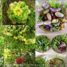人間と自然の共繁栄のかたち。生態系を拡張させる「協生農法」の実践