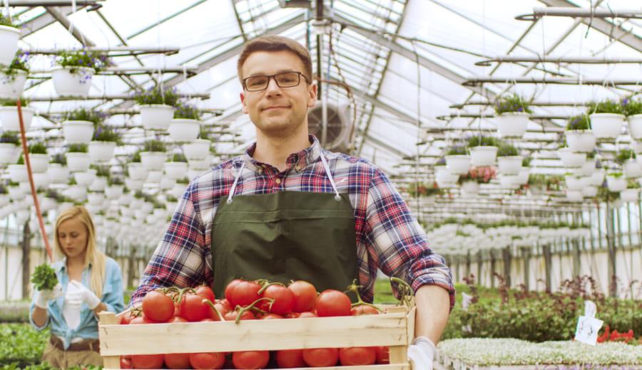 温室で野菜を育てる