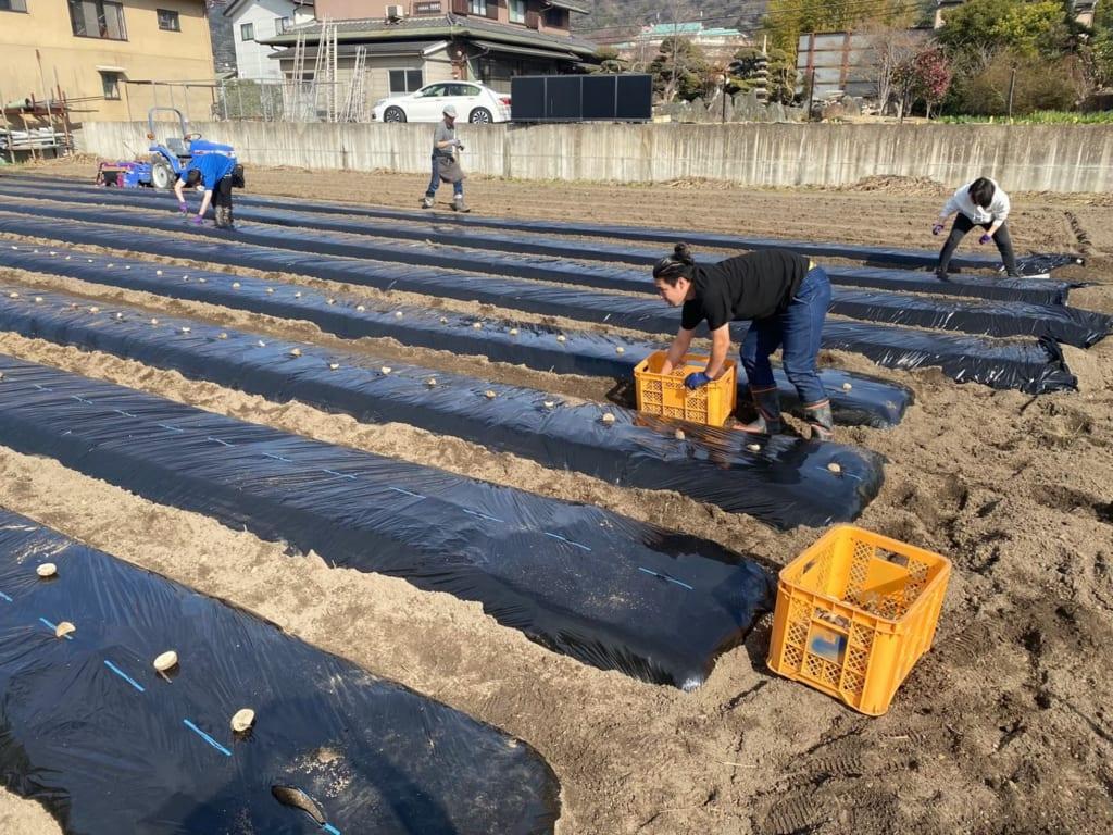 農作業に取り組むスタッフたち