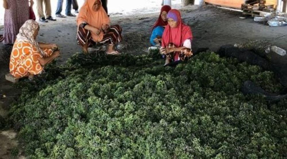 海藻農家の様子